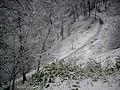 Curico, la nevada del 2007, cerro Condell (10029510455).jpg