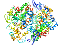 Cyclooxygenase-2