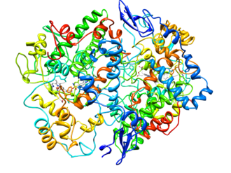 Cyclooxygenase - Image: Cyclooxygenase 2