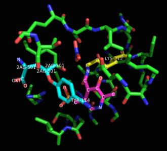 Cystathionine gamma-lyase - Image: Cystathionase inhibited zoomed