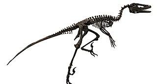 <i>Dakotaraptor</i> Extinct genus of dinosaurs