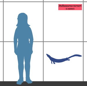 Dallasaurus - Estimated size, compared to a human.