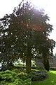 De Vrijheidsboom te Sint-Laureins - 372633 - onroerenderfgoed.jpg