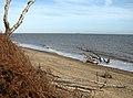 Dead trees of Boathouse Covert - geograph.org.uk - 2137650.jpg