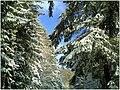 December Black Mountains Foret Noir - Master Mythos Black Forest Photography 2013 High Glotter Valley Sägendobel Pass - panoramio (5).jpg