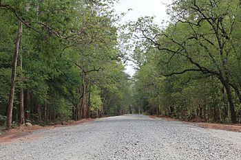 Deep Forest at Sitanadi Wildlife Sanctuary of Chattisgharh.jpg