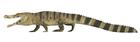 Deinosuchus riograndensis