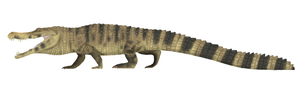 Deinosuchus riograndensis.png
