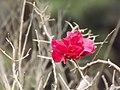 Delhi-Rajasthan 8-6-12 to 12-6-12 092.JPG