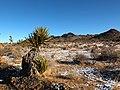 Desert Snow (8331147215).jpg