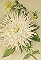Die Gartenwelt (1899) (20731218638).jpg