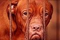 Dog BN3Q8569.jpg