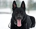 Dog days of winter 150226-F-BO262-057.jpg