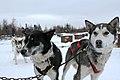 Dogs (6387381273).jpg
