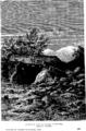 Dolmen au pied du canigou.png