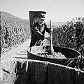 Druivendrager met stamper bij een kuip met druiven, Bestanddeelnr 254-4173.jpg