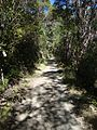 Dun Mountain Trail 09.JPG