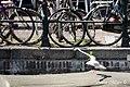DutchPhotoWalk Amsterdam - panoramio (27).jpg
