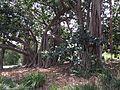 Dutton Park, Brisbane, Queensland 04.jpeg