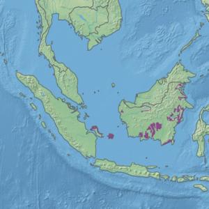 Экорегион IM0161.png