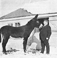 Edgerton Winnett Day and horse, Carnots.jpg