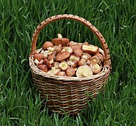 Edible fungi in basket 2020 G1.jpg