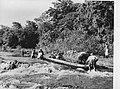Een prauw wordt voortgeduwd bij de stroomversnellingen in de Surinamerivier bij , Bestanddeelnr 935-1329.jpg