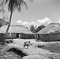 Een rijstpelmolen in Nickerie, Bestanddeelnr 252-5606.jpg