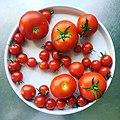 Egna tomater är knark. (42210949670).jpg