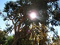 El queñe004 - panoramio.jpg