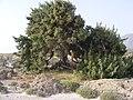 Elaphonisi - panoramio (27).jpg