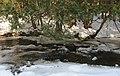Elora Gorge Stream - panoramio.jpg