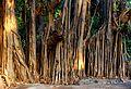 Empress Garden Banyan Trees.jpg