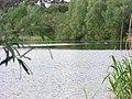 Enten auf dem Angelsee - panoramio.jpg