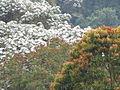 Entre los colores del bosque en Buga.JPG