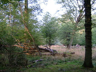 Epping Forest - Secondary woodland in Epping Forest