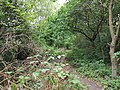 Epping Forest 20170727 112415 (49374677281).jpg