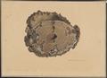 Equus caballus - enteroliet - 1851 - Print - Iconographia Zoologica - Special Collections University of Amsterdam - UBA01 IZAA100290.tif