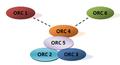 Estructura ORC.png