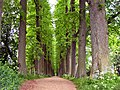 Eutiner Schloss tree walkway on east side of schloss May 2002 - panoramio.jpg