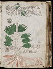 Folio f34r : La section consacrée à l'herboristerie avec des illustrations de plantes.