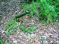 Facsimile Kist at Temple Wood, Friars Carse.JPG