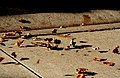 Fall Wind (253184791).jpg
