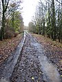 Farm track at Woodhams Farm, in Thaxted, Essex.jpg