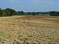 Farmland, Odiham - geograph.org.uk - 956276.jpg