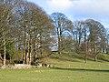Farmland near Pontblyddyn - geograph.org.uk - 312628.jpg