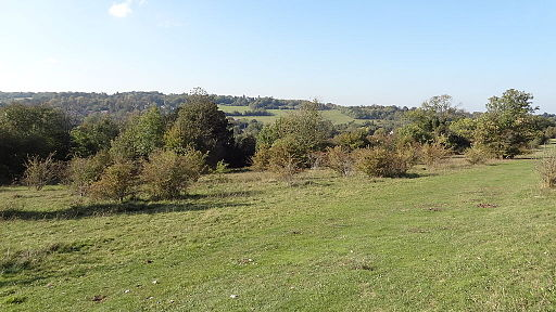 Farthing Downs view
