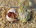 Faunia - hatched bird.jpg