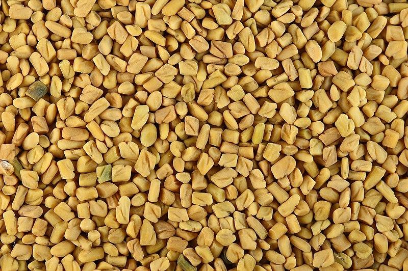 Fichier:Fenugreek seeds.jpg