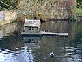 Floating home for ducks and associates - geograph.org.uk - 989432.jpg